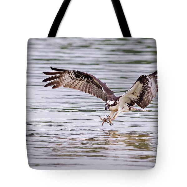 Tote Bag featuring the photograph Osprey Going For Breakfast by Lori Coleman