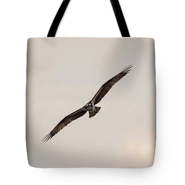 Osprey Head On Tote Bag