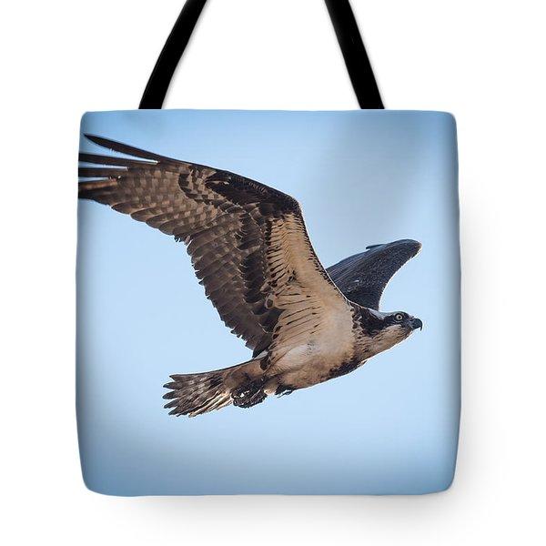 Osprey In Flight Tote Bag by Paul Freidlund
