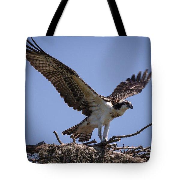 Osprey In Nest 1 Tote Bag