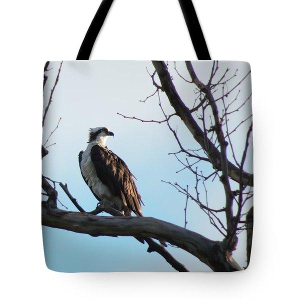 Osprey In Tree Tote Bag