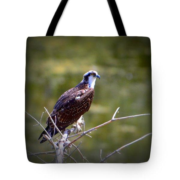 Osprey In Wait Tote Bag