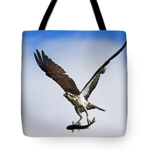 Osprey Incoming Mullet Tote Bag by Larry Nieland