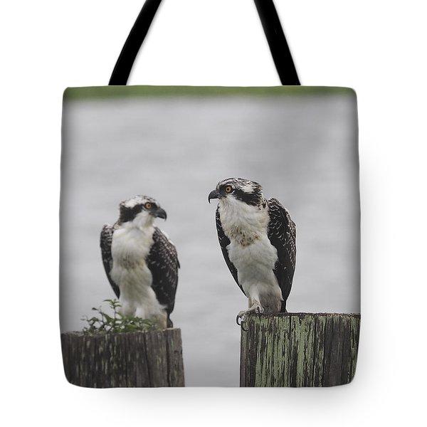 Osprey On Nj Shore 2014 Tote Bag