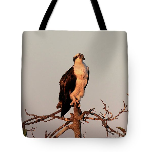 Osprey On The Caloosahatchee River In Florida Tote Bag by Louise Heusinkveld