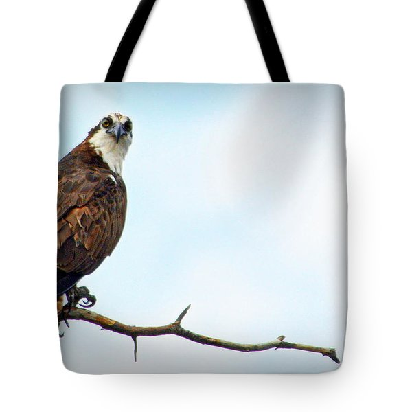 Tote Bag featuring the photograph Osprey Out On A Limb by AJ Schibig