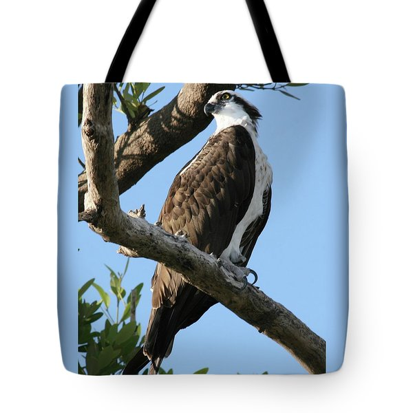Osprey - Perched Tote Bag