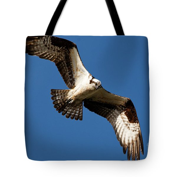 Tote Bag featuring the photograph Osprey - Soaring by Sue Harper