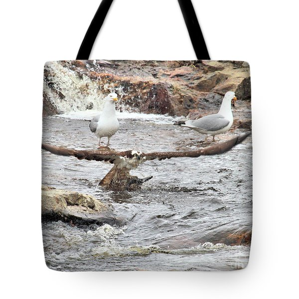 Tote Bag featuring the photograph Osprey Takes Fish From Gulls by Debbie Stahre