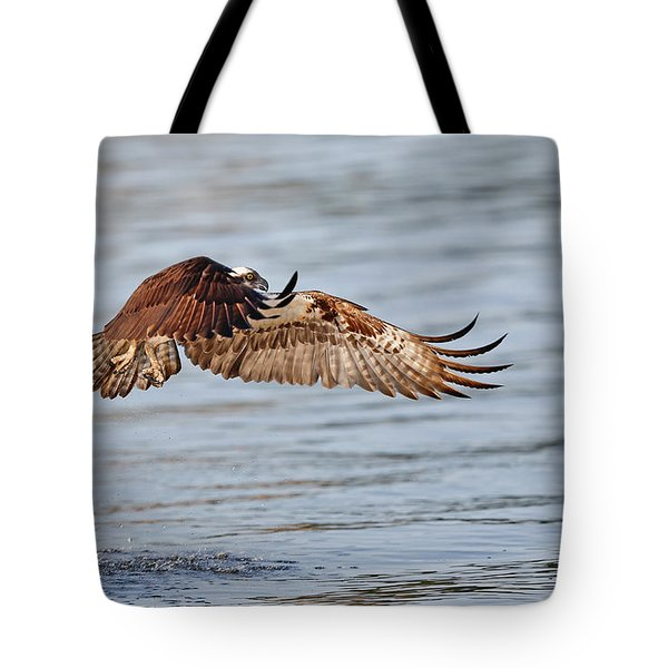 Osprey Wings Tote Bag