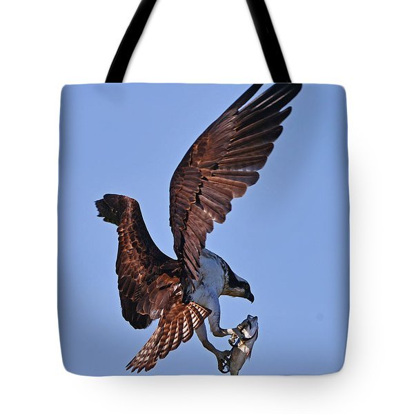 Osprey With Fresh Catch Tote Bag