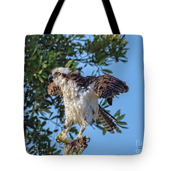 Osprey With Meal Tote Bag