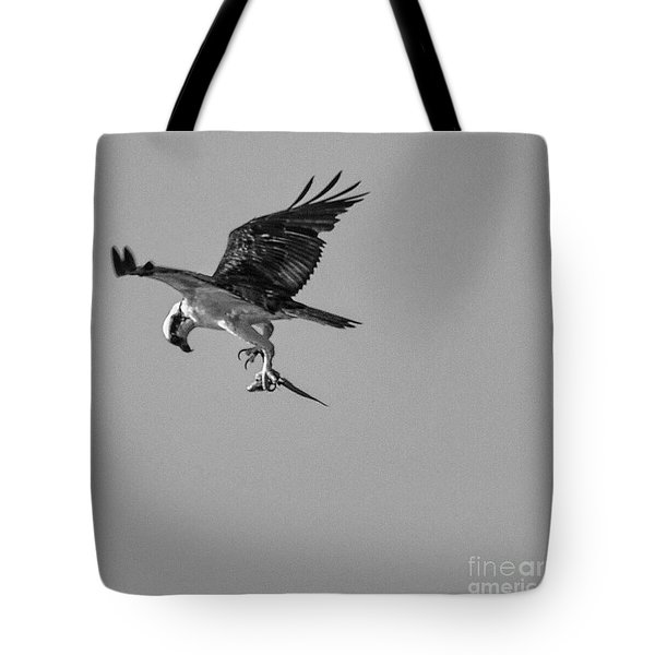 Osprey With Prey Tote Bag