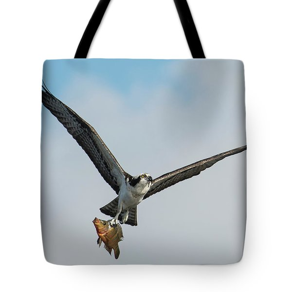 Osprey With Rainbow Bass 1 Tote Bag