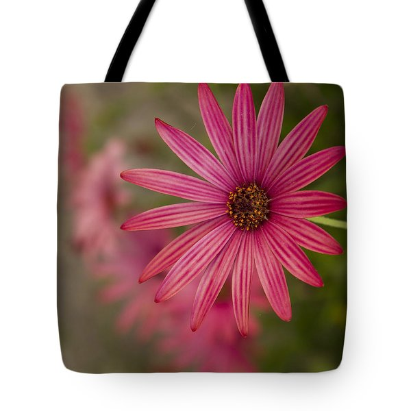 Osteospermum The Cape Daisy Tote Bag by Shirley Mitchell
