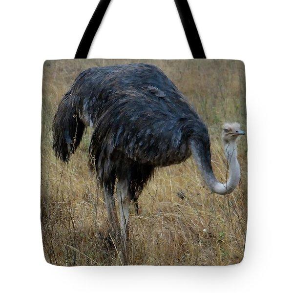 Ostrich In The Grass 1 Tote Bag