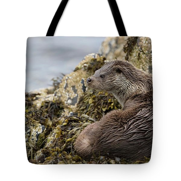 Otter Relaxing On Rocks Tote Bag