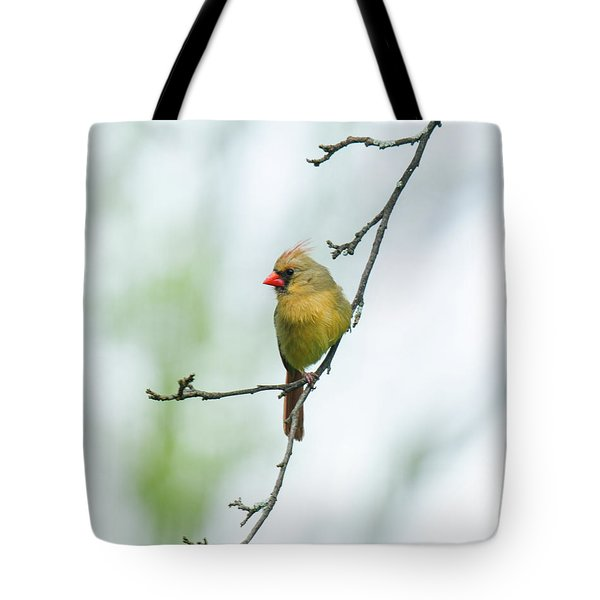 Out On A Limb 2 Tote Bag