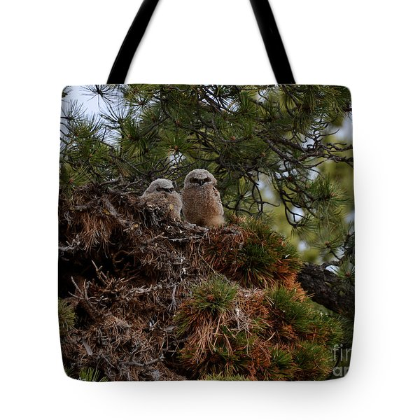 Owl Babies Rocky Mountain National Park  Tote Bag by Nature Scapes Fine Art