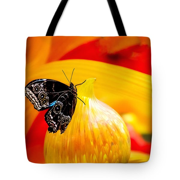 Owl Eye Butterfly On Colorful Glass Tote Bag