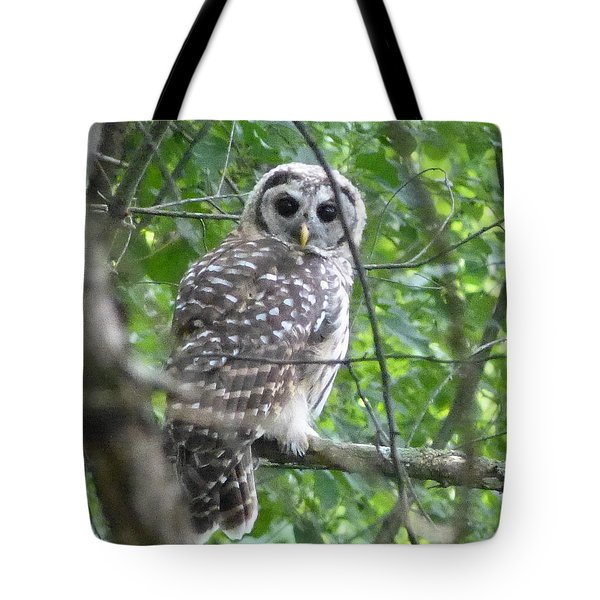 Tote Bag featuring the photograph Owl On A Limb by Donald C Morgan