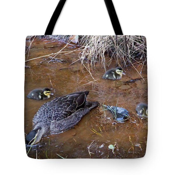 Tote Bag featuring the photograph Pacific Black Duck Family by Miroslava Jurcik