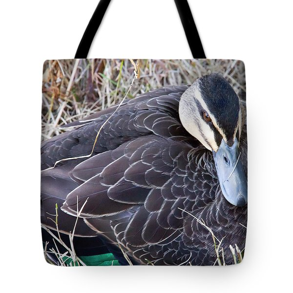 Tote Bag featuring the photograph Pacific Black Duck Mother by Miroslava Jurcik
