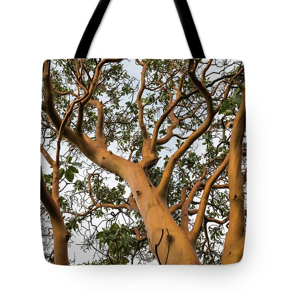 Pacific Madrone Trees Tote Bag