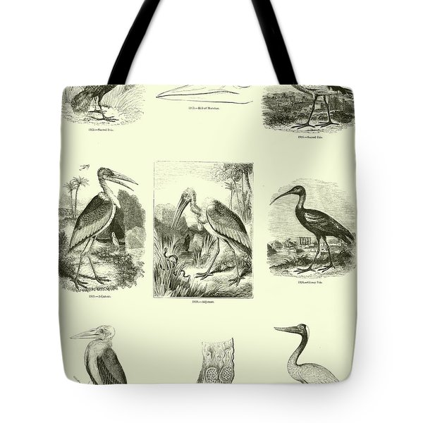 Page From The Pictorial Museum Of Animated Nature  Tote Bag by English School