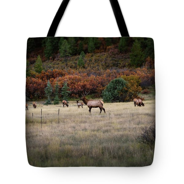 Tote Bag featuring the photograph Pagosa Autumn Elk by Jason Coward