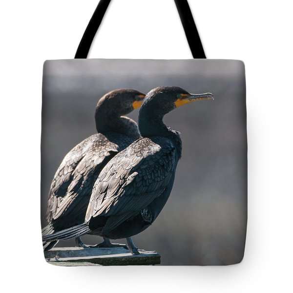 Pair Double-crested Cormorant 3 March 2018 Tote Bag