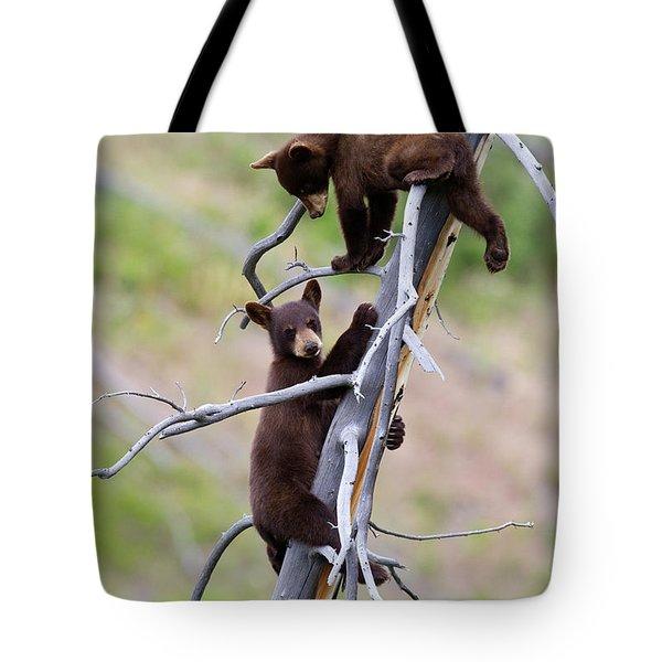 Pair Of Bear Cubs In A Tree Tote Bag