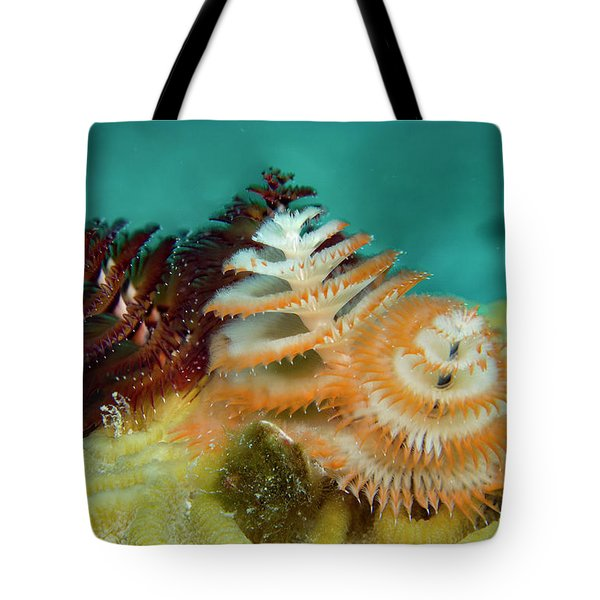 Tote Bag featuring the photograph Pair Of Christmas Tree Worms by Jean Noren