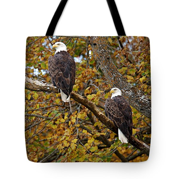 Pair Of Eagles In Autumn Tote Bag by Larry Ricker