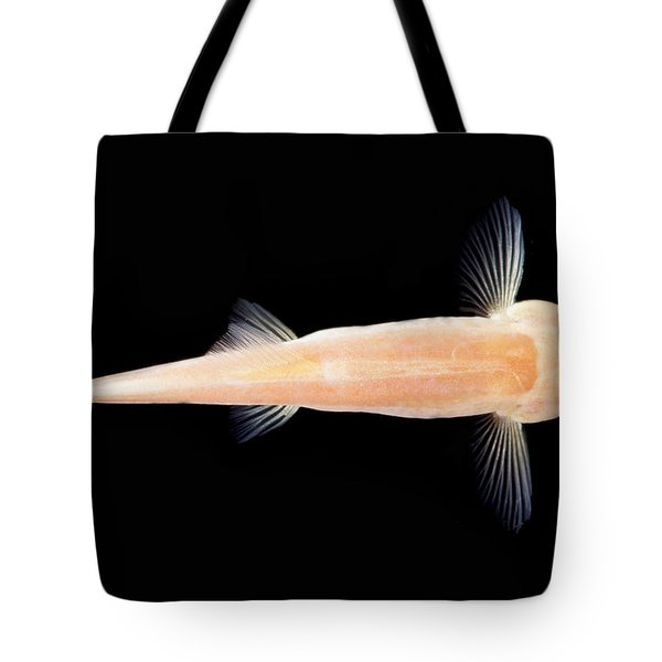 Palace Of The Dragon God Cave Loach Tote Bag