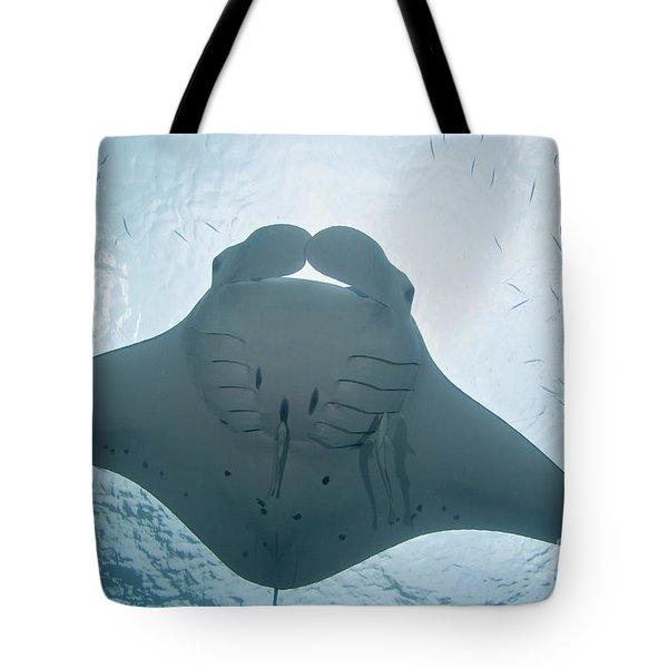 Palau, Manta Ray Tote Bag by Dave Fleetham - Printscapes