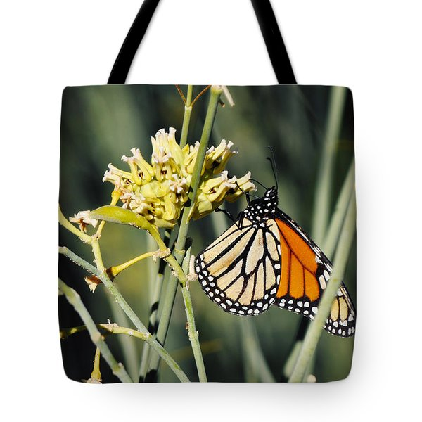 Tote Bag featuring the photograph Palm Springs Monarch by Kyle Hanson