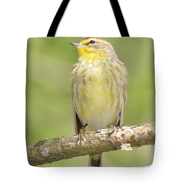 Palm Warbler Tote Bag by Alan Lenk