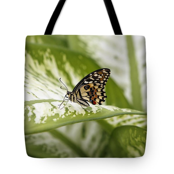 Papilio Demoleus Tote Bag