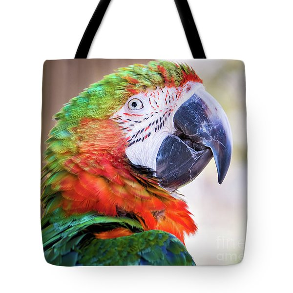 Parrot Tote Bag by Stephanie Hayes