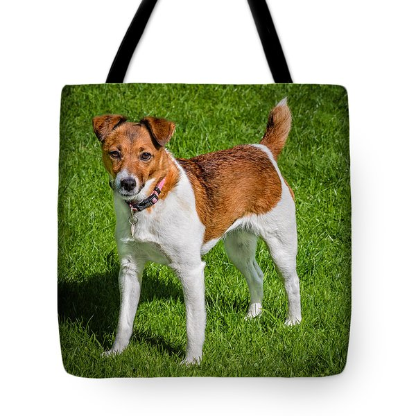 Tote Bag featuring the photograph Parson Jack Russell by Nick Bywater