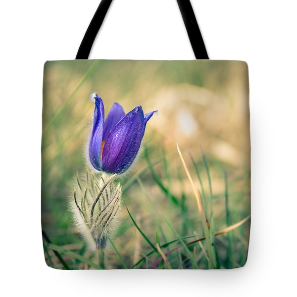 Pasque Flower Tote Bag by Andreas Levi