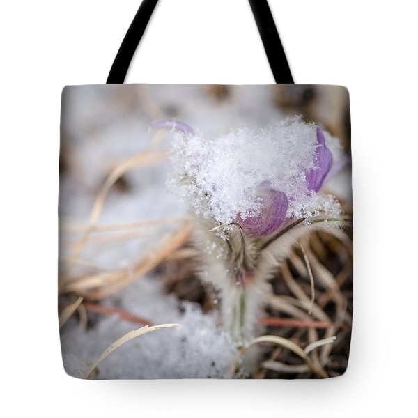 Pasqueflower In The Snow Tote Bag
