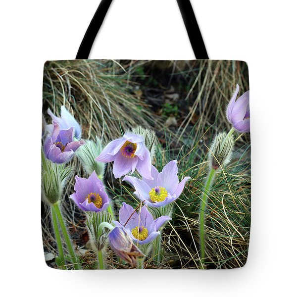 Tote Bag featuring the photograph Pasqueflower by Michal Boubin
