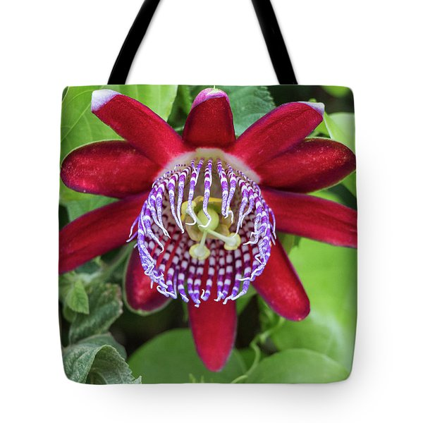 Passiflora Ruby Glow. Passion Flower Tote Bag