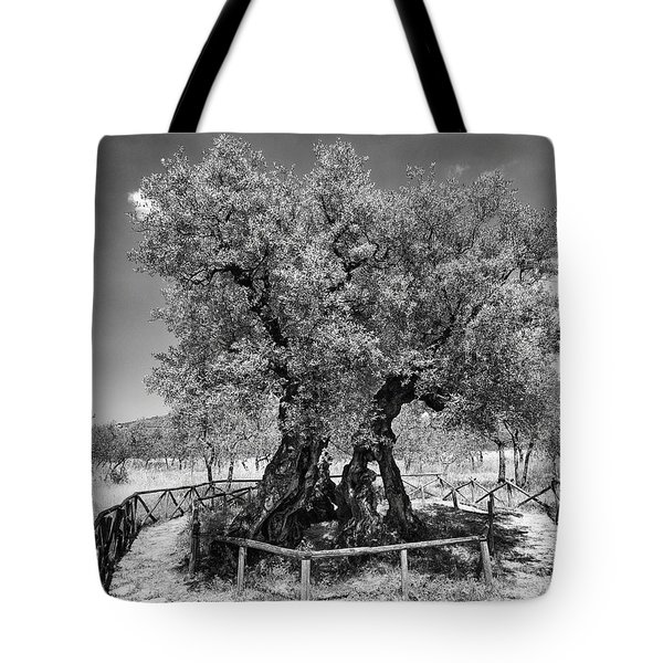 Patriarch Olive Tree Tote Bag