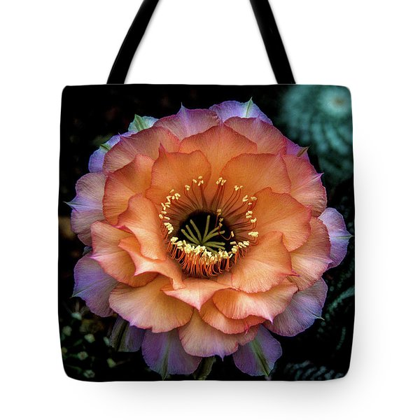 Tote Bag featuring the photograph Peach Desert Glow Bloom by Julie Palencia