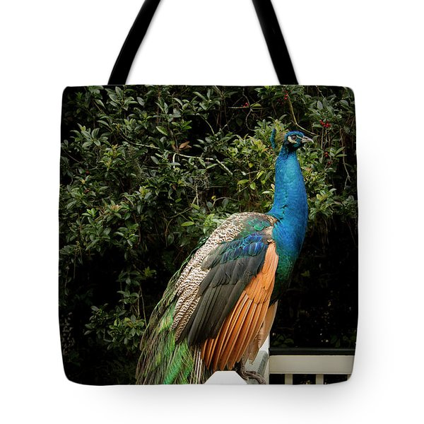 Tote Bag featuring the photograph Peacock On A Fence by Jean Noren