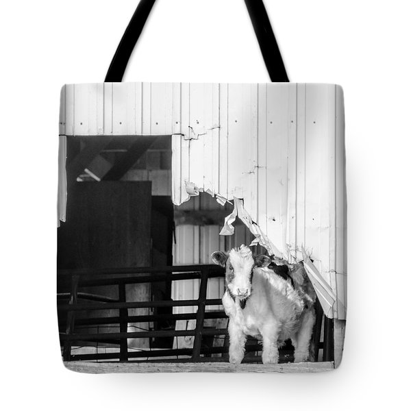 Tote Bag featuring the photograph Peak-a-boo Calf by Dan Traun