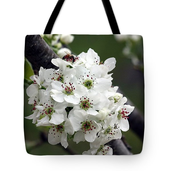 Tote Bag featuring the photograph Pear Blossoms In Spring by Sheila Brown